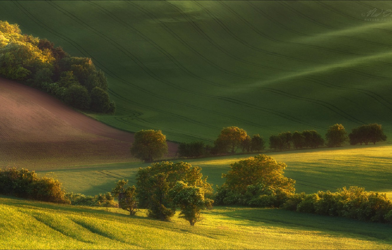 Photo wallpaper summer, trees, field, valley, Czech Republic, Vlad Sokolovsky