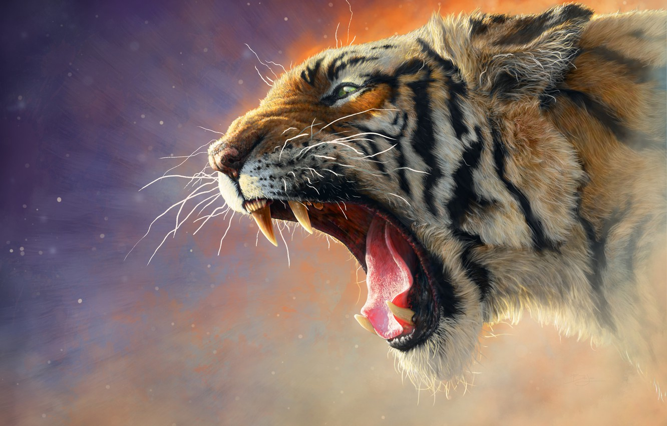 Photo wallpaper Cat, Tiger, Cat, Mouth, Fangs, Face, Predator, Tiger, Predator, Cat, Roar, Animal, Animal, Mouth, Catch, …