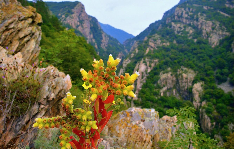Wallpaper Mountains, Flowers, Flowers