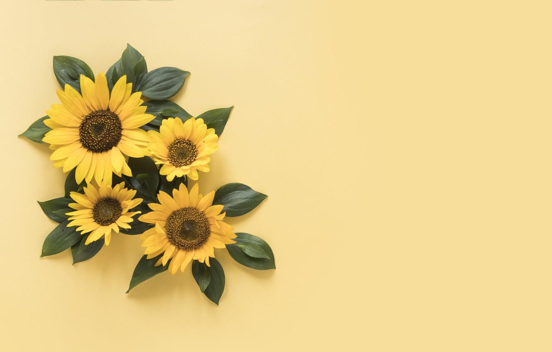 Wallpaper Sunflowers Yellow Background Yellow Beautiful
