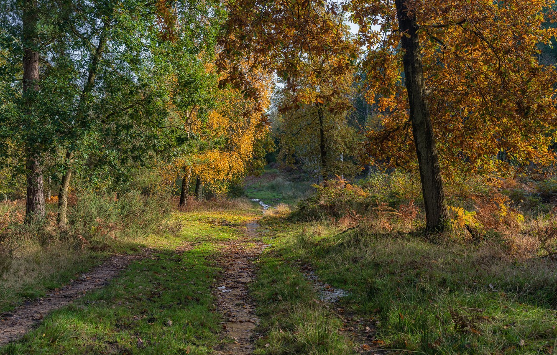 Photo wallpaper road, autumn, forest, trees, England, Stratford-on-Avon District