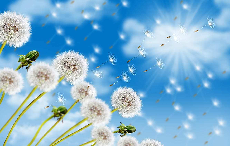 Photo wallpaper summer, the sky, Dandelions