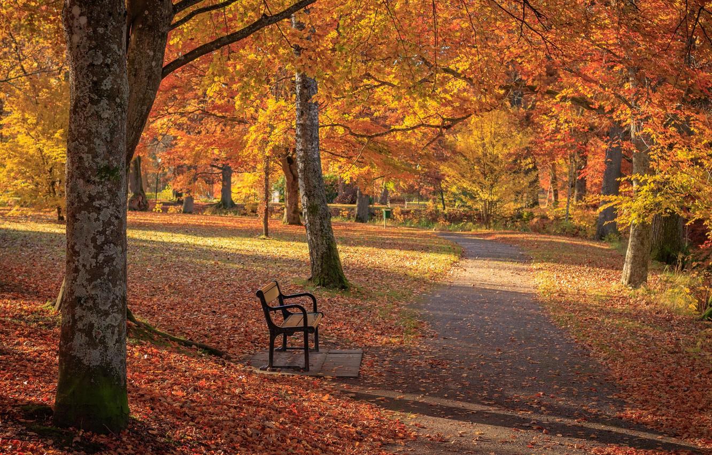 Photo wallpaper autumn, Park, foliage, track