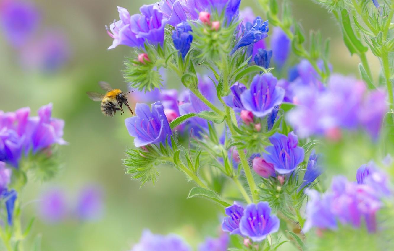 Photo wallpaper macro, flowers, bumblebee