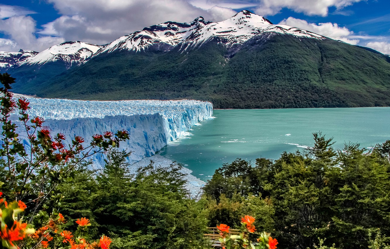 Photo wallpaper mountains, lake, glacier, the bushes, Argentina, Argentina, Andes, Patagonia, Patagonia, Andes, Perito Moreno Glacier, Los …