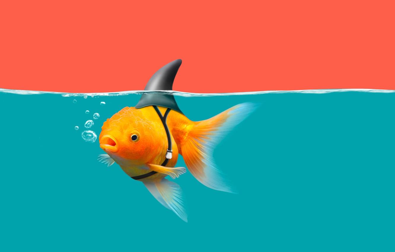 Photo wallpaper water, goldfish, shark fin