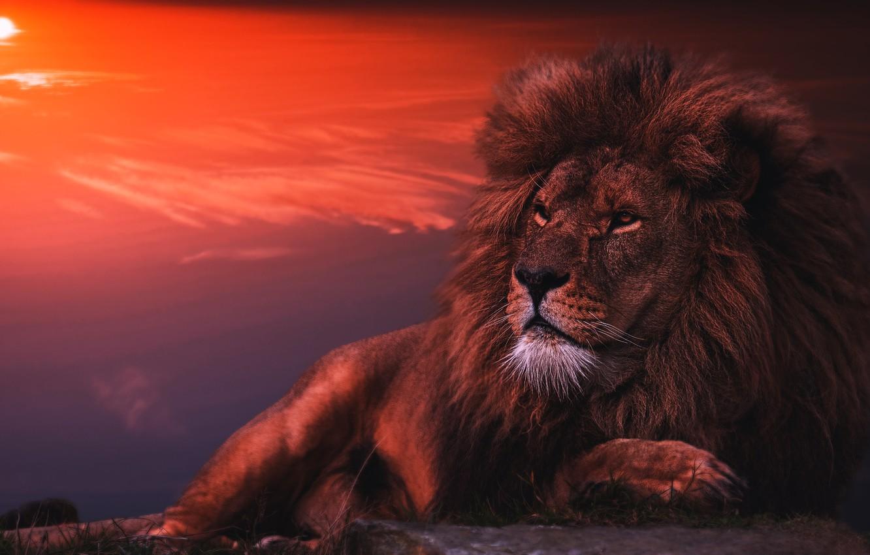 Photo wallpaper face, the dark background, Leo, lies, photoart