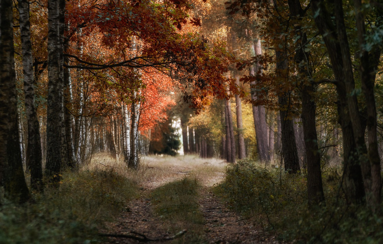 Photo wallpaper road, autumn, forest