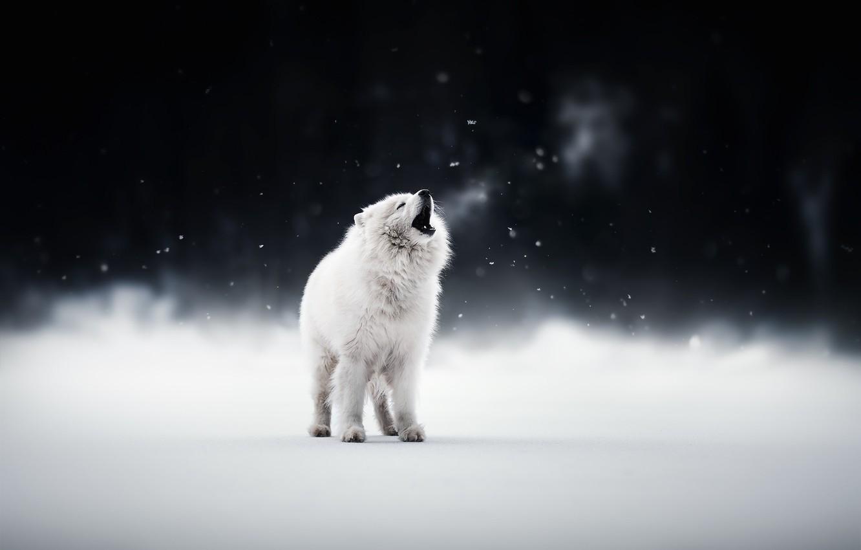 Photo wallpaper winter, each, dog