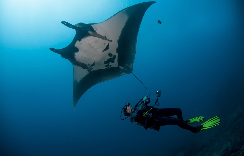 Photo wallpaper stingray, diver, underwater view