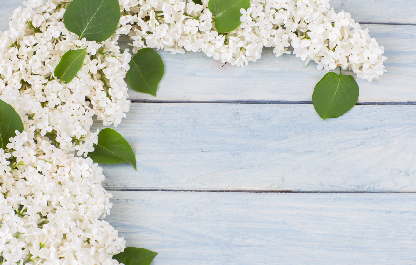 Photo wallpaper flowers, branches, white, white, flowers, lilac, spring, lilac