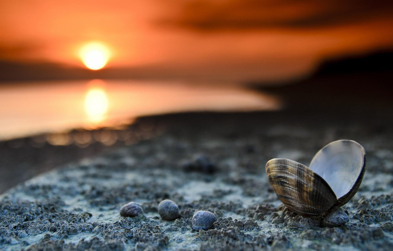 Photo wallpaper sea, beach, sunset, shore, the evening, shell
