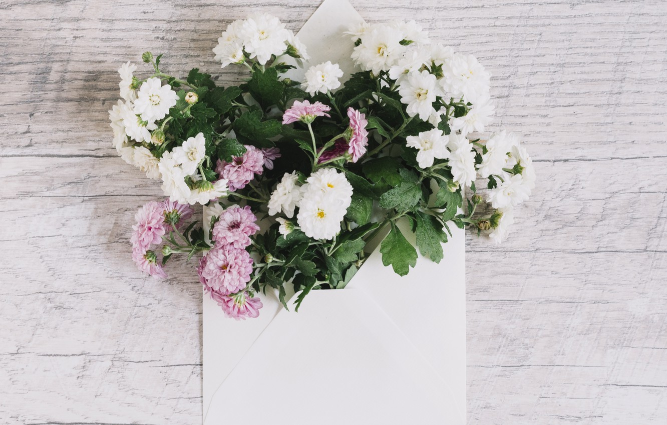 Photo wallpaper bouquet, pink, white, white, Beautiful, wood, pink, flowers, asters, Leaves, aster