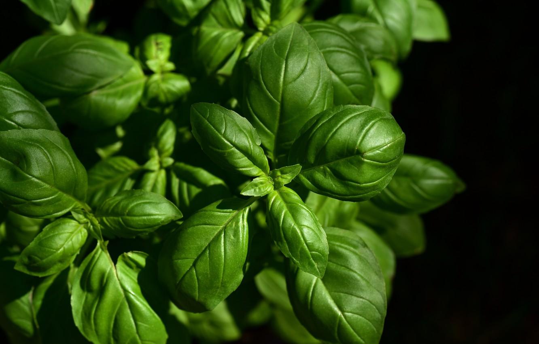 Photo wallpaper greens, leaves, plant