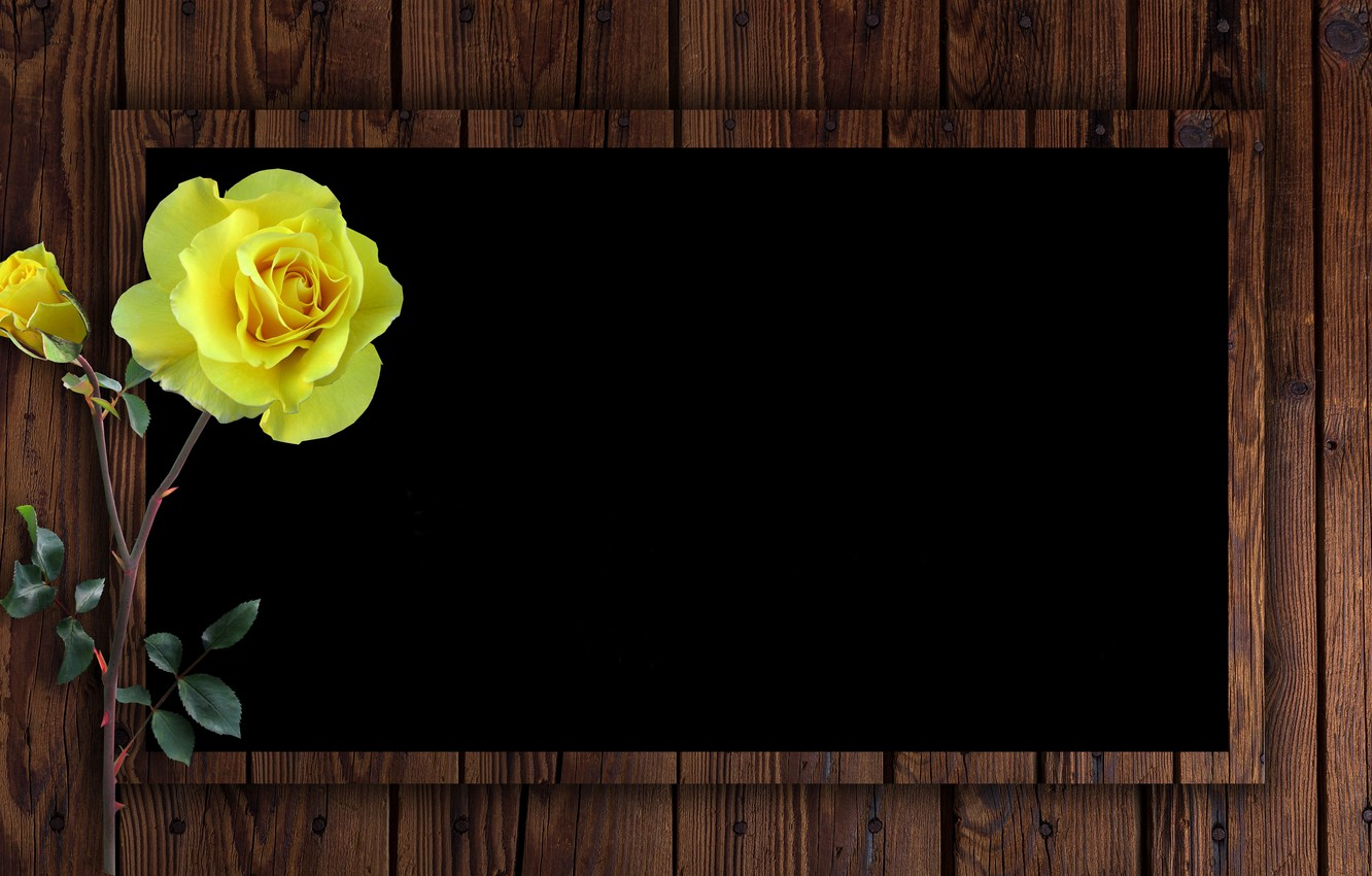 Photo wallpaper rose, postcard, template, blank