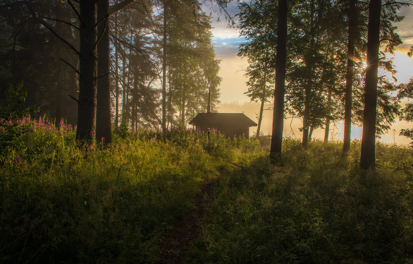 Photo wallpaper forest, grass, light, trees, flowers, fog, comfort, house, dawn, thickets, glade, morning, haze, pine, house, …