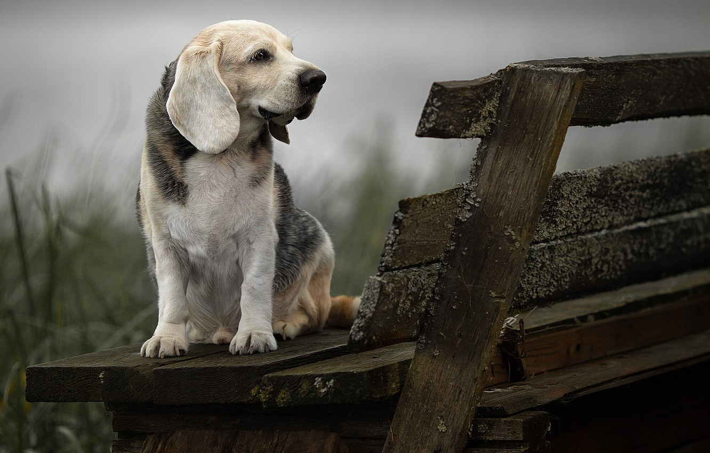 Photo wallpaper animal, dog, profile, bench, dog