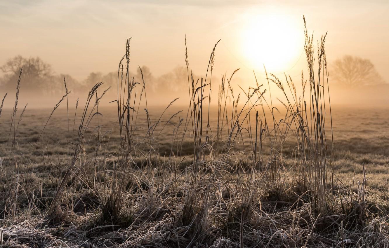 Photo wallpaper grass, fog, morning