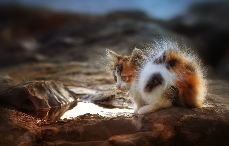 Photo wallpaper puddle, kitty, cat