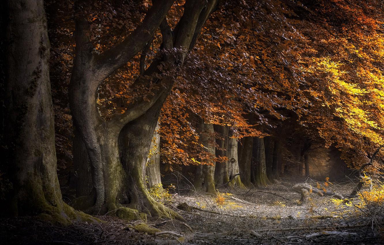 Photo wallpaper autumn, trees, Park