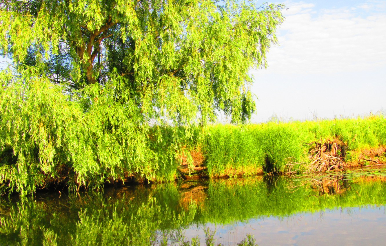 Photo wallpaper greens, the sky, grass, leaves, water, nature, lake, reflection, river, tree