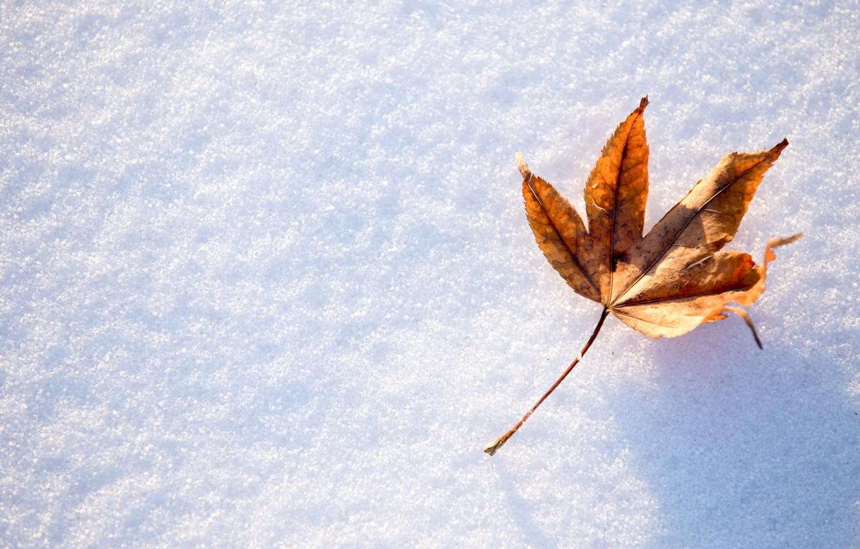 Photo wallpaper winter, autumn, leaves, snow, maple, winter, background, autumn, snow, leaves, maple