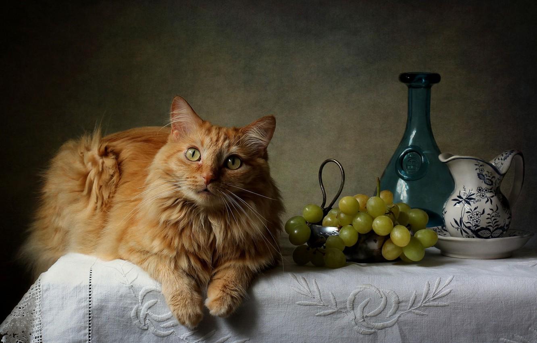 Photo wallpaper cat, red, grapes, vase