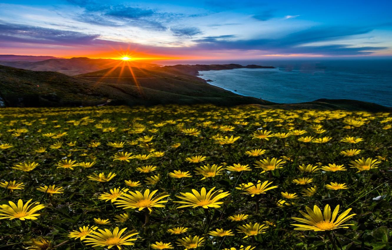 Photo wallpaper the sun, rays, landscape, sunset, flowers, nature, the ocean, USA, the Peninsula, Marin Headlands
