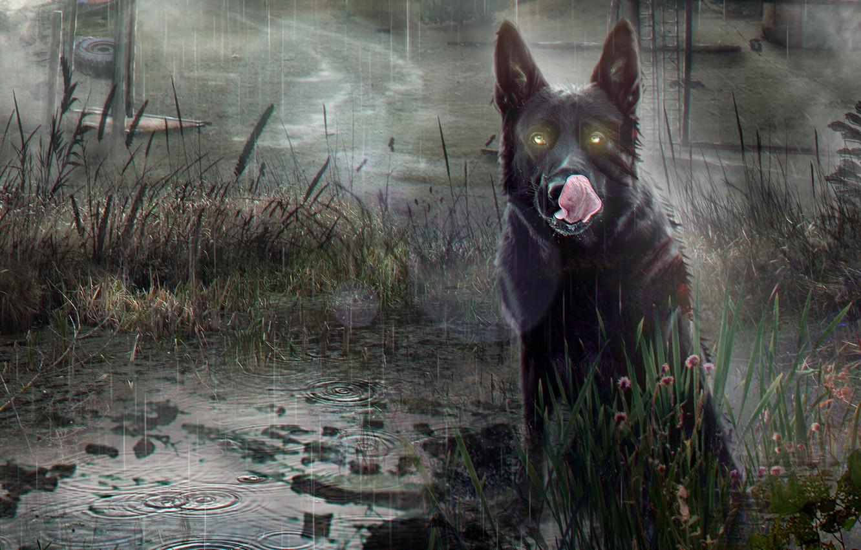 Photo wallpaper Dog, The game, Rain, Stalker, Stalker, Pripyat, Art, Chernobyl, by Arina Zhanzhora, A dog, Arina …