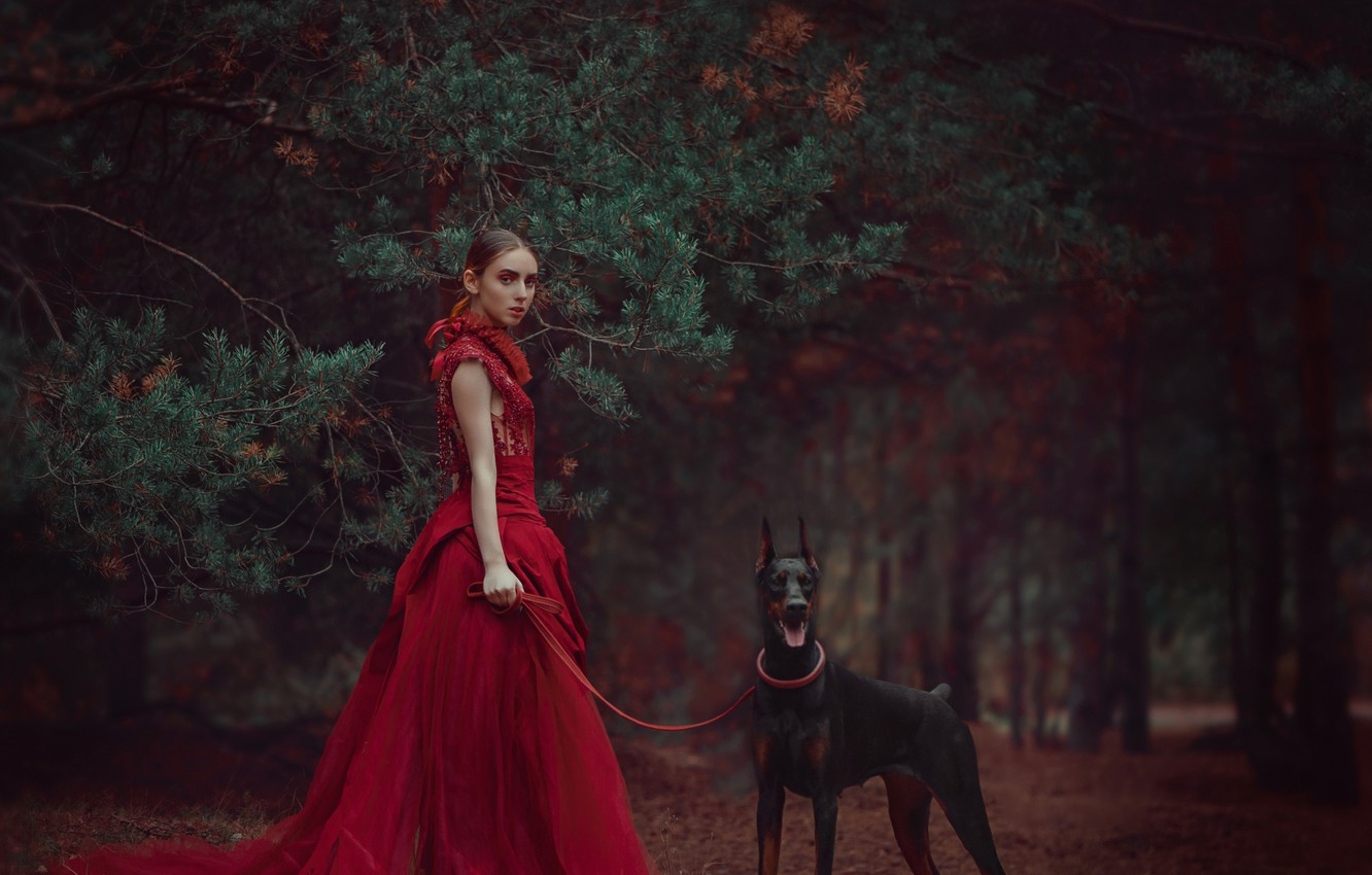 Photo wallpaper forest, girl, branches, style, dog, dress, red dress, pine, Doberman, Anastasia Dobrovolskaya