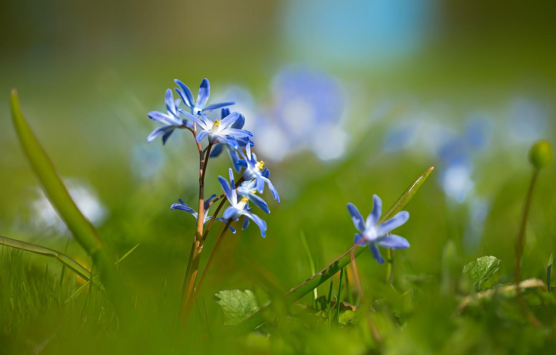 Photo wallpaper flowers, spring, bokeh