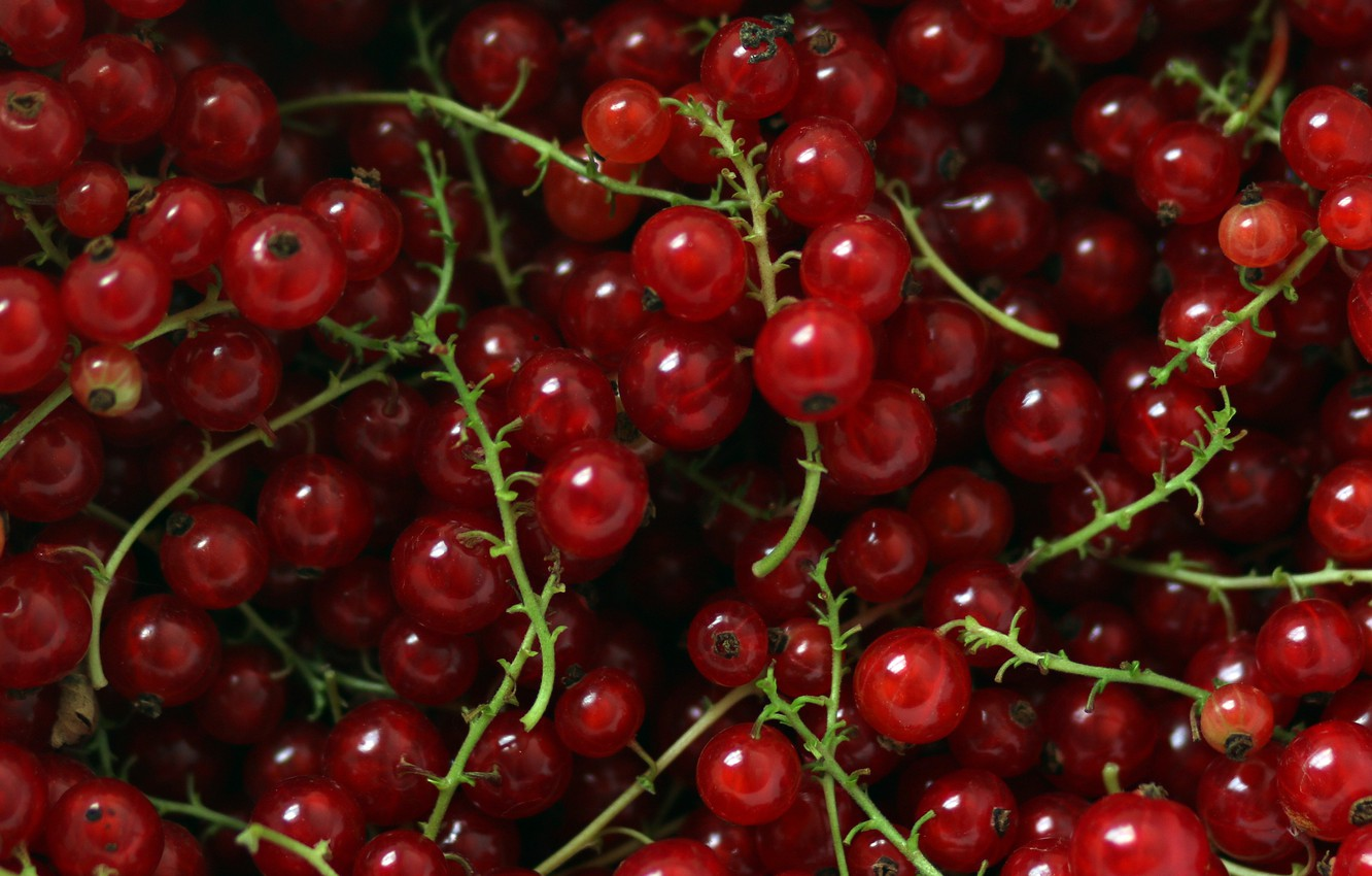 Photo wallpaper berries, food, red, a lot, currants, red currant