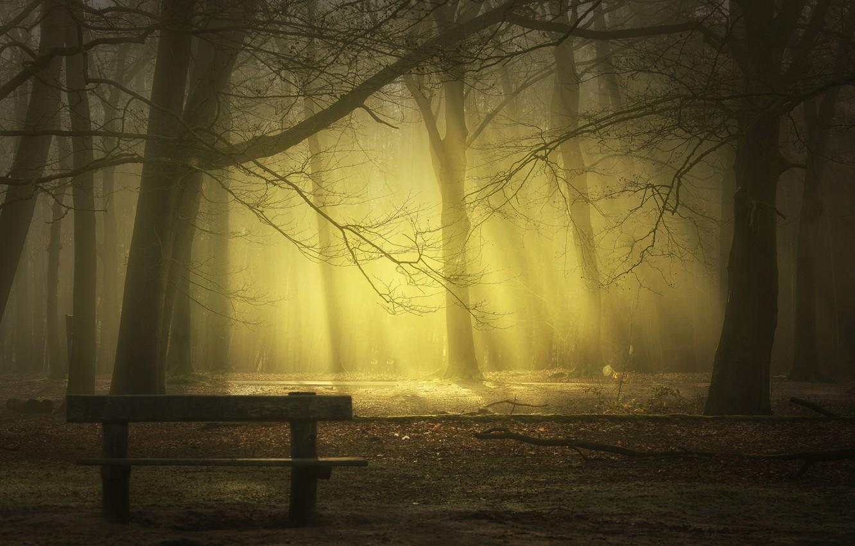 Photo wallpaper rays, bench, fog, Park, park, rays, fog, bench, Saskia Dingemans