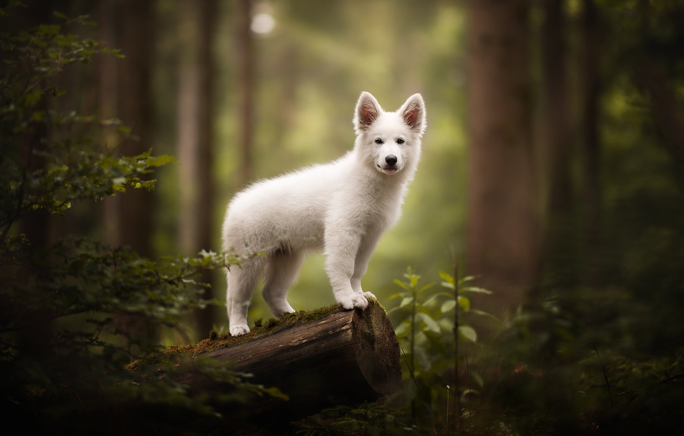 Photo wallpaper forest, each, dog