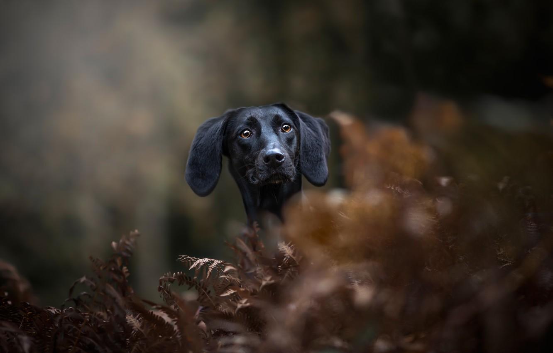 Photo wallpaper face, portrait, dog, fern, bokeh, Dachshund