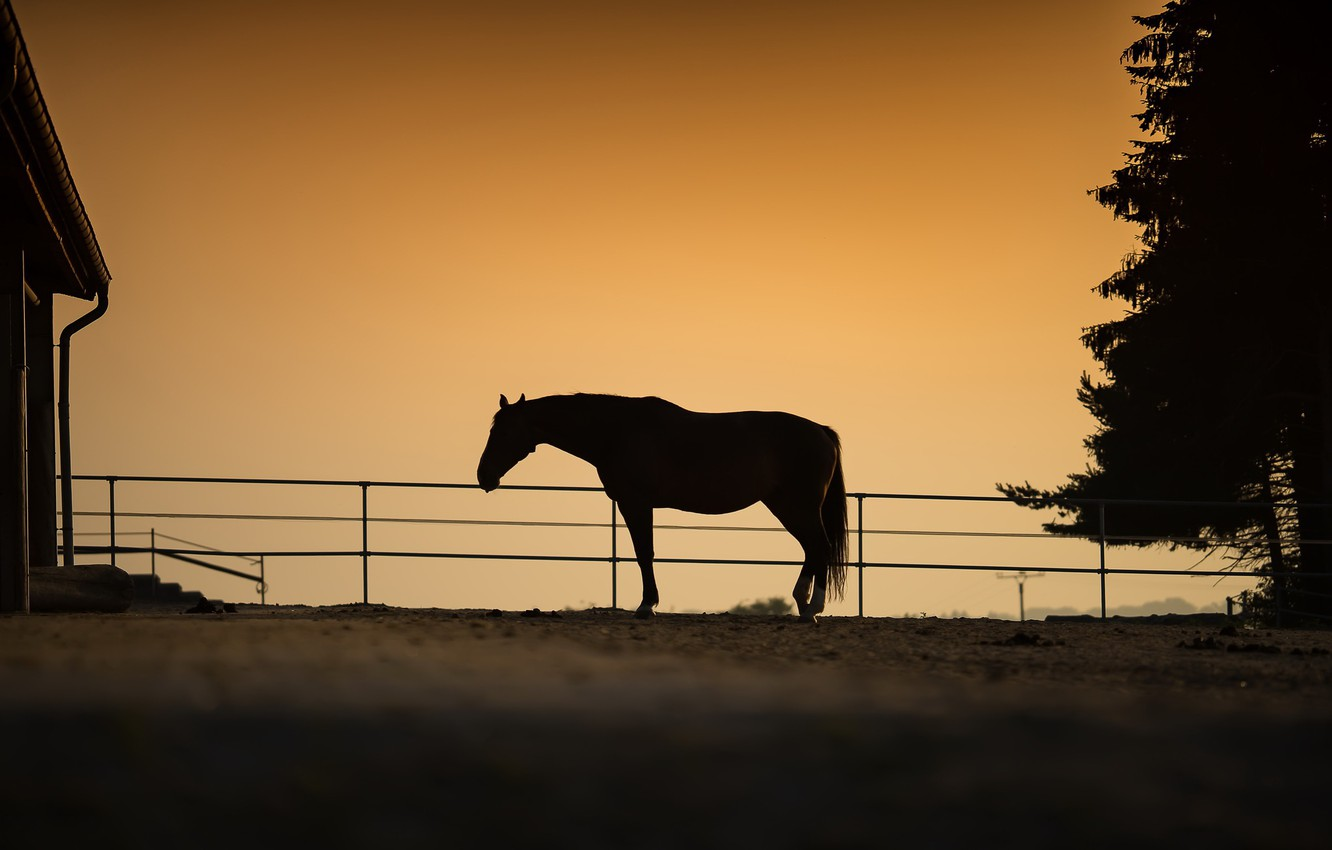 Photo wallpaper nature, horse, the evening