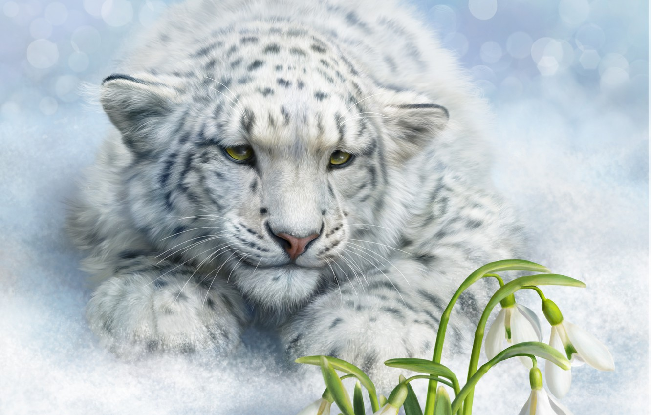Wallpaper Snow Flowers Mood Art Snowdrops Snow Leopard Wild Cat Irbis Images For Desktop Section Nastroeniya Download