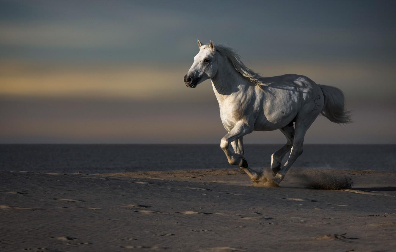 Photo wallpaper sea, horse, shore