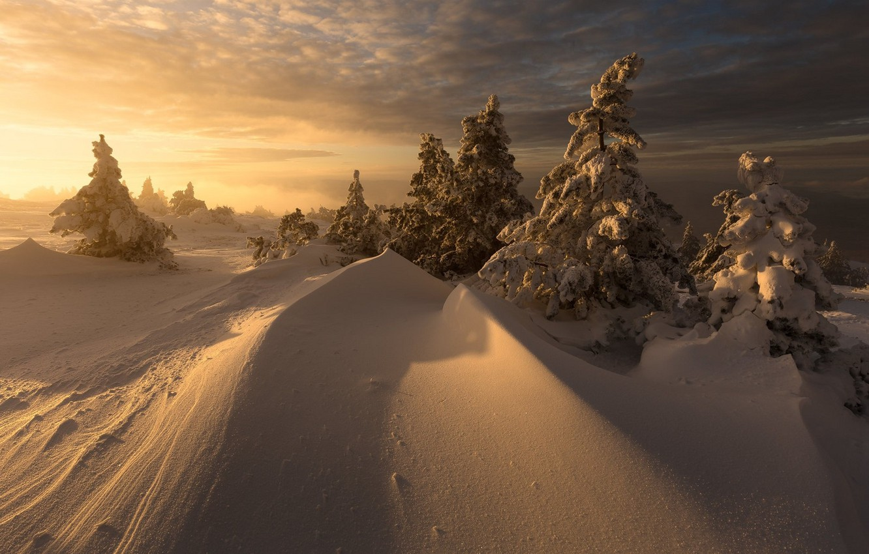 Wallpaper Winter Snow Landscape Nature Beauty Christmas Trees Images For Desktop Section Pejzazhi Download