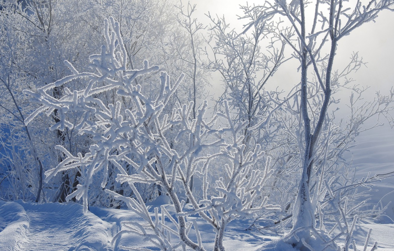 Photo wallpaper winter, frost, snow, branches, nature, track, path, the bushes