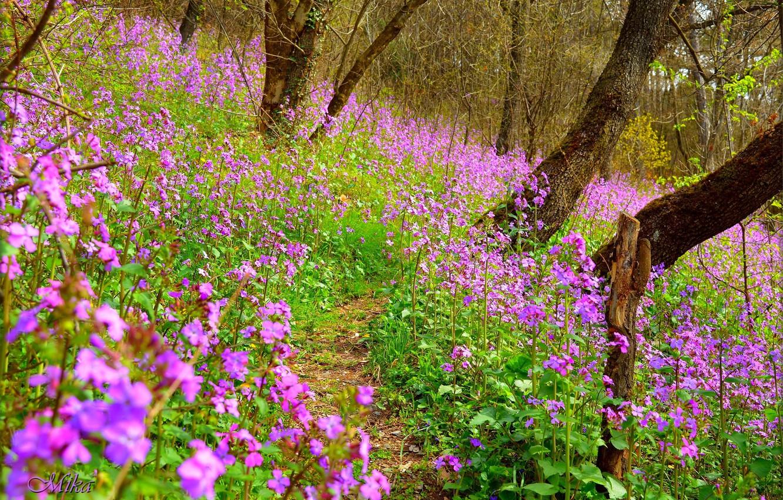 Photo wallpaper Nature, Spring, Flowers, Spring, Flowering, Flowering