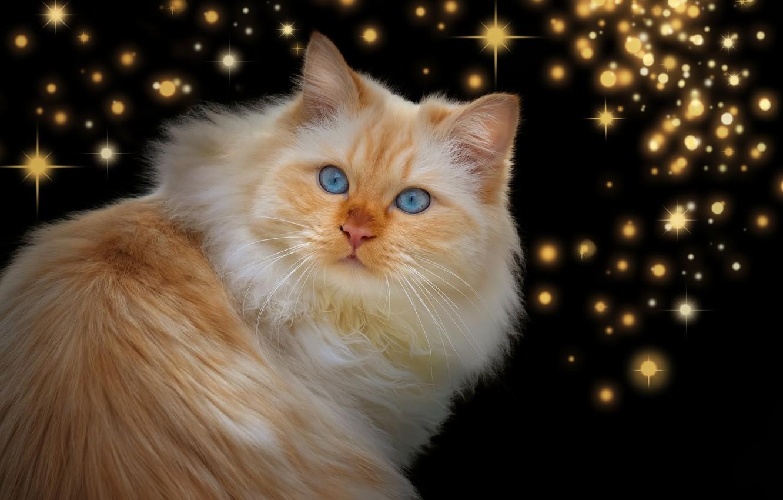 Photo wallpaper cat, look, red, stars, the dark background