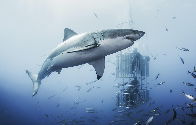 Photo wallpaper sea, people, shark, shooting, underwater world, divers