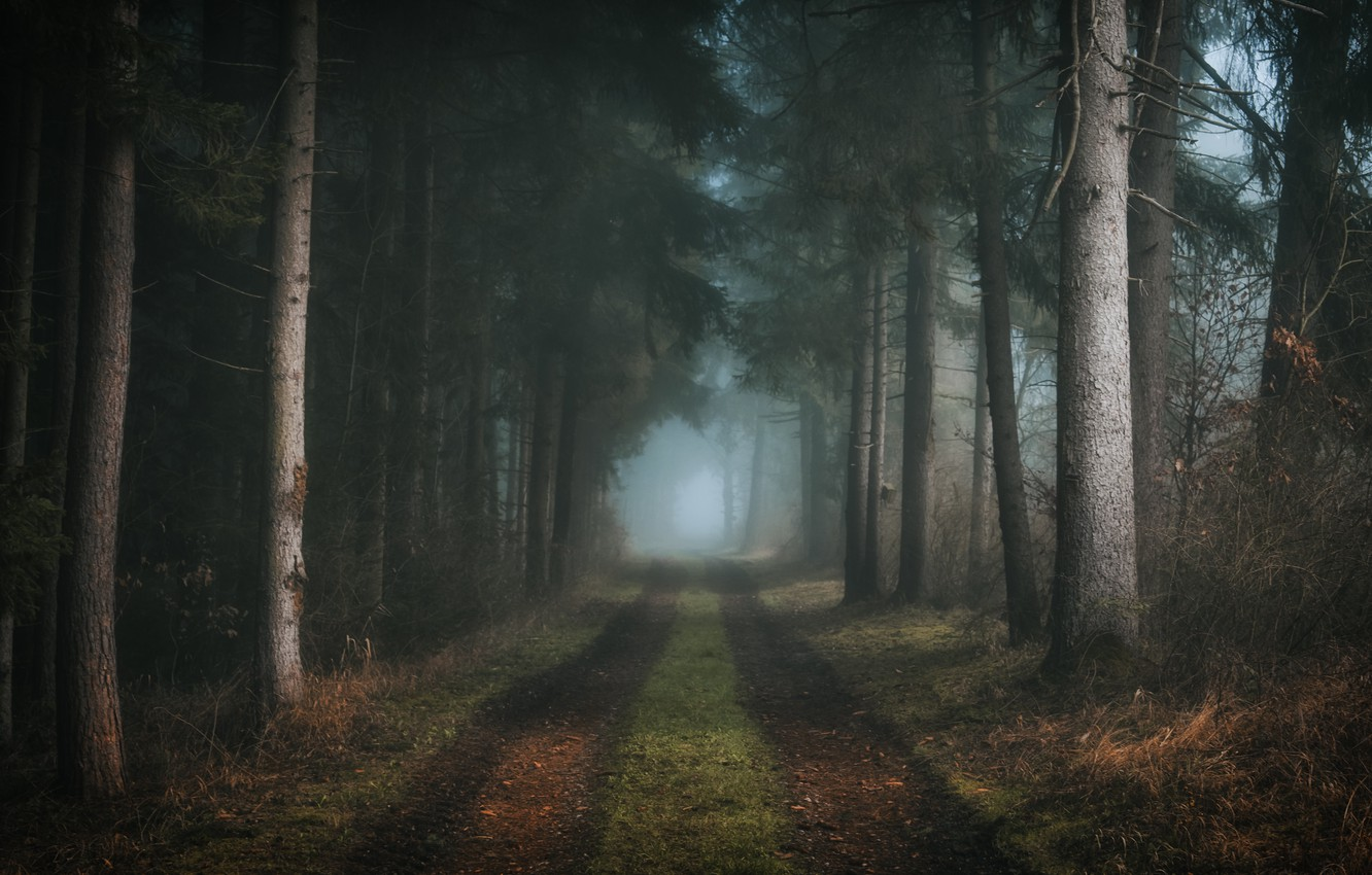 Photo wallpaper road, forest, nature, fog