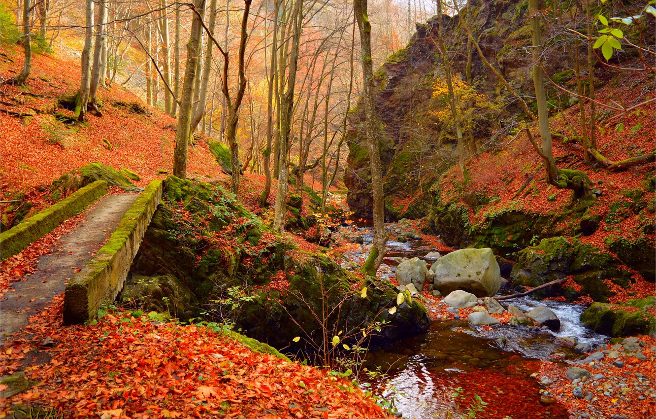 Photo wallpaper Autumn, Forest, Stream, Fall, Foliage, Autumn, Forest, Leaves