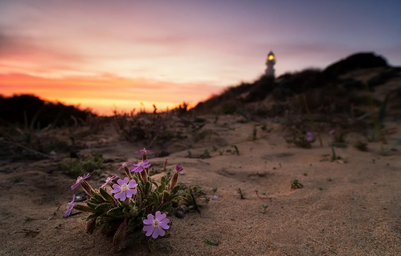Photo wallpaper sunset, flowers, nature