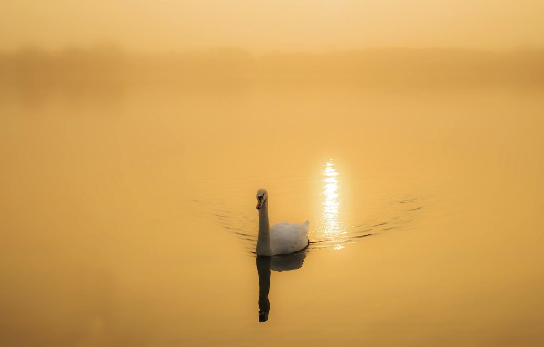 Photo wallpaper nature, lake, Swan