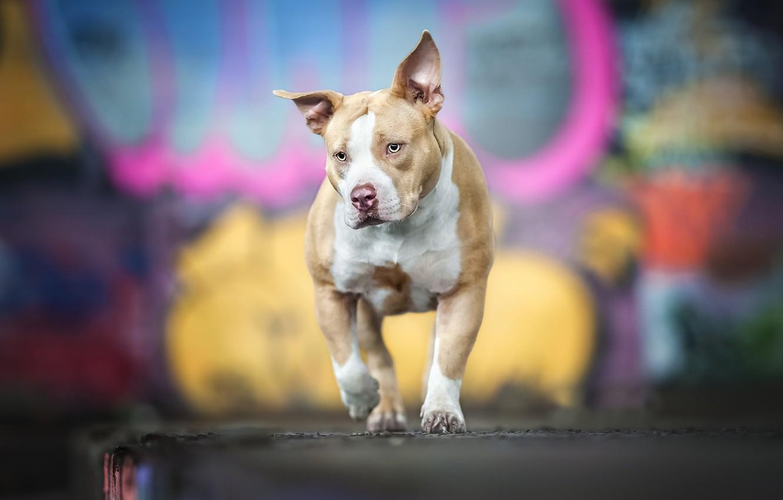 Photo wallpaper background, each, dog