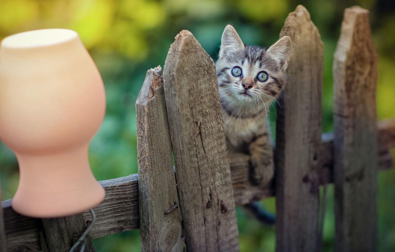 Photo wallpaper look, the fence, baby, muzzle, kitty, pot