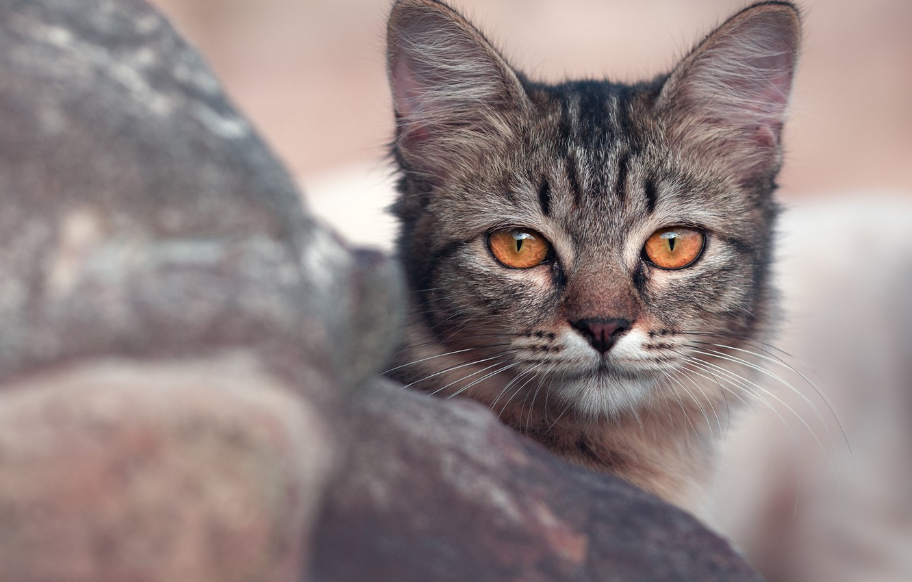 Photo wallpaper eyes, cat, look